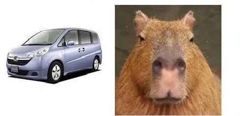 ステップワゴンとカピバラの比較画像